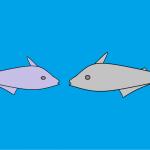 Percakapan Dua Ikan