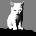 Seekor Kucing Titipan